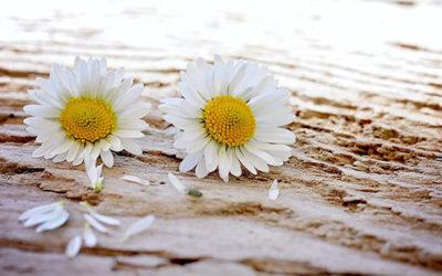 Mit ganzheitlicher Traumatherapie auf dem Weg zu erfüllten Beziehungen